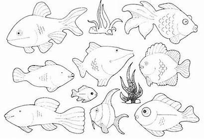 Ocean Coloring Pages Animal Fish Types Colouring