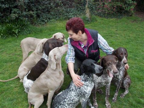 German Shorthaired Pointer Vs Lab Shedding by Lab Vs German Shorthair Breeds Picture