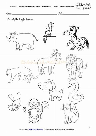 Jungle Animals Worksheet Worksheets Activity Sheet Pre