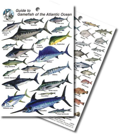 divelogs atlantic game fish id card