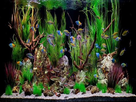 tropical fish tank decorations decoration how to create aquarium decoration themes decorating themes fish tank coffee table