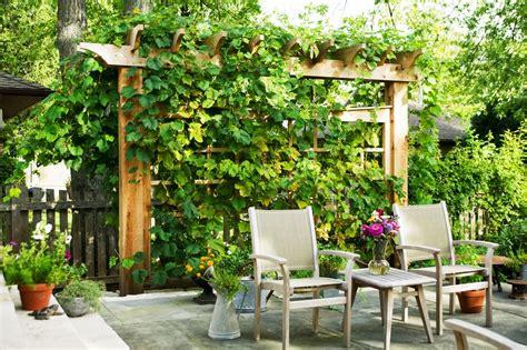 Best Patio Decor by 21 Best Patio Grape Arbor Decor Ideas