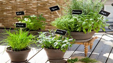 plantes aromatiques cuisine jardinière sos plantes aromatiques pour la cuisine déco cool