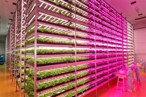 indoor farming led lights this former semiconductor factory is now the world 39 s