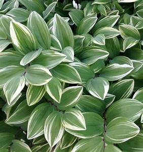 10, Variegated, Plants, For, Every, Garden