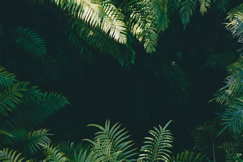 jungle background images  hd backgrounds