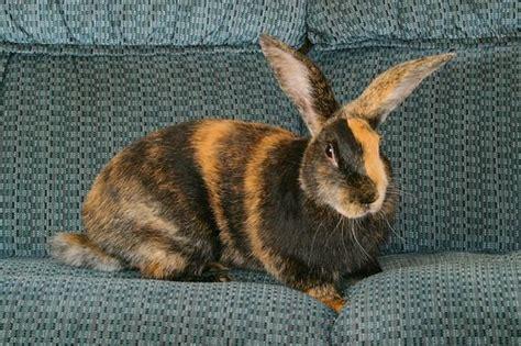 10 best pet rabbit breeds for children pethelpful