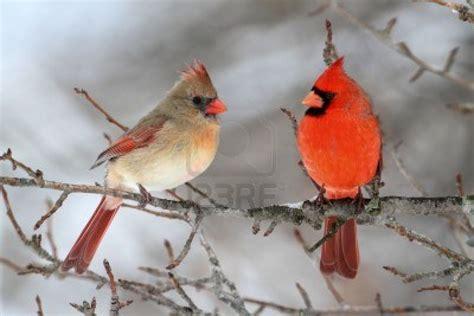 cardinal storm lake ia official website