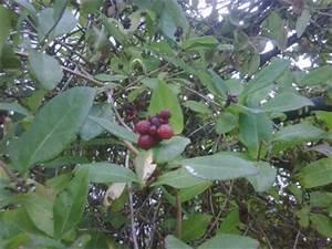 Pflanze Mit Roten Blüten : wie hei t diese pflanze strauch mit roten beeren lonicera pflanzenbestimmung pflanzensuche ~ Eleganceandgraceweddings.com Haus und Dekorationen