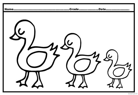 duck  duckling coloring pages