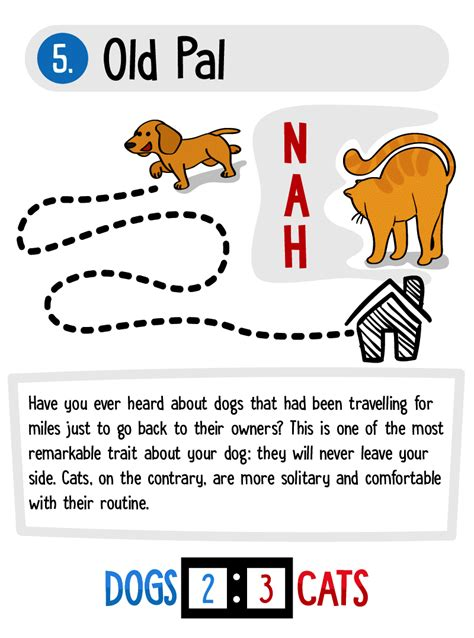 better dogs cats than why reasons displayed infographic awesome point