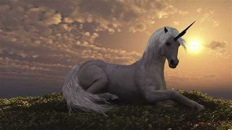 unicorn fantasy horse wallpaper  desktop