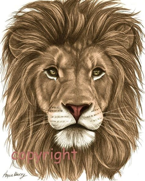 lion images  pinterest animal drawings wild
