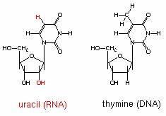 Nucleotide Model preap