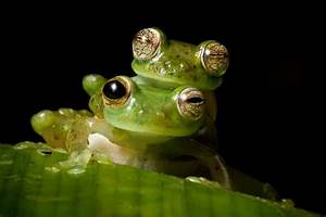 10 Of The Most Bizarre Frogs You U0026 39 Ll Ever See