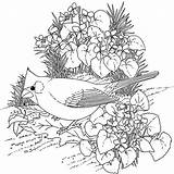 Coloring Bird Cardinal Drawing Hard Button Using Copy Getdrawings Grab Welcome Well sketch template