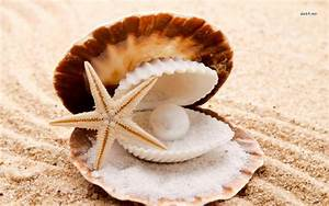 Pearl in the seashell wallpaper - Photography wallpapers ...