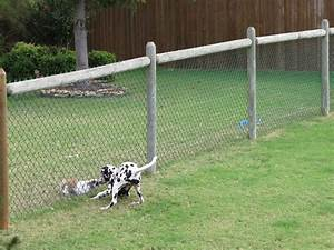cheapdogfenceideas free issues of family circle With no fence for dog