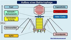 Teleskop Vergrößerung Berechnen : mikroskop bilder bungsmaterial download light microscope ~ Themetempest.com Abrechnung