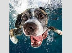 71 besten Hunde unter Wasser Bilder auf Pinterest Hund