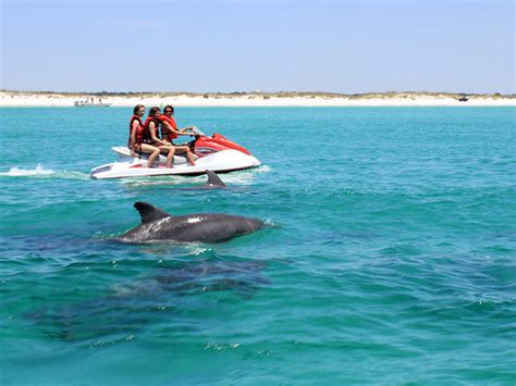 Dolphin Boat Rentals by Panama City Dolphin Tours Boat Rentals
