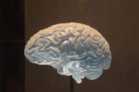 cerebral contusion autoaccidentcom