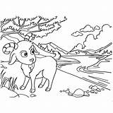 Goat Coloring Pages Mountain Printable Getcolorings Getdrawings sketch template
