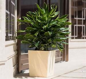 Gros Pot Pour Olivier : grand pot pour arbre grands pots pour arbustes pour une glycine il faut un gros pot paris c t ~ Melissatoandfro.com Idées de Décoration