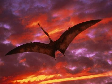 ornithocheirus walking  dinosaurs wiki fandom