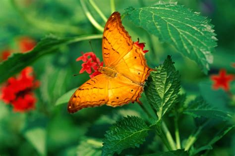 The Most Beautiful Butterfly Wallpapers Most Beautiful