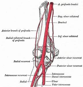 Radial Artery