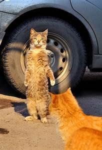 21 Hilarious Photos Of Cats Standing Up