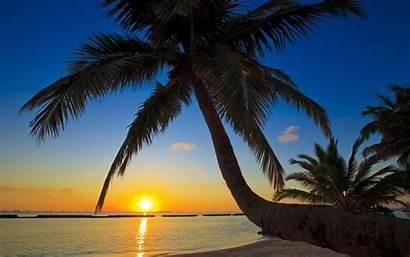 Palm Tree Wallpapers Beach