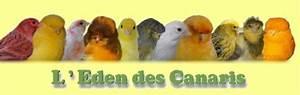 Droguerie De L Eden : l 39 eden des canaris portail ~ Dailycaller-alerts.com Idées de Décoration