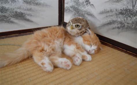 cat  owl besties      animals