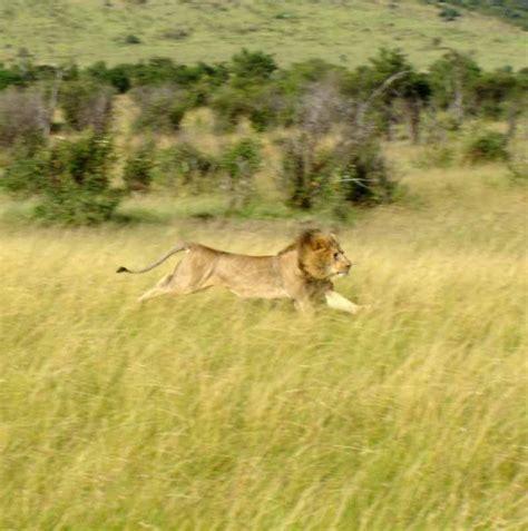 wildlife  marvelous examples  killer instinct