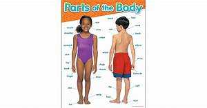 Parts Of The Body Learning Chart