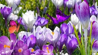 Flowers Wallpapers Screensavers Spring Desktop Screen Savers