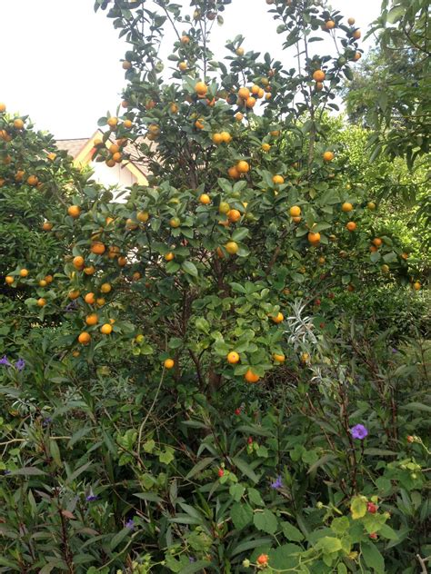 houston fruit tree in the garden with harvest why grow fruit trees in 4338