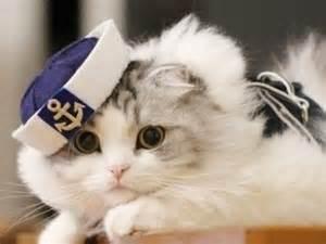 captain cats captain kitty cats