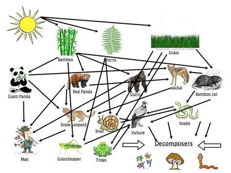cuisine web flow of energy pandas