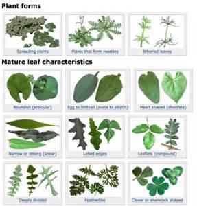 Indoor Herb Garden Uk