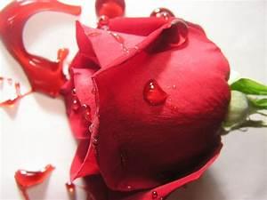 bleeding red rose 3 by UrDisasterousStock on DeviantArt