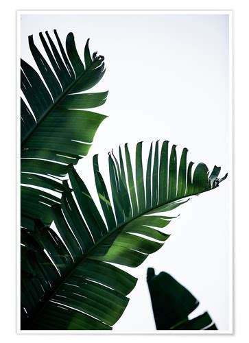 palm leaves  posters  prints posterloungecom