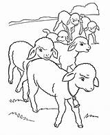 Coloring Lamb Easter Lambs Sheets Pages Row Activity Flock Printable Hard Children sketch template
