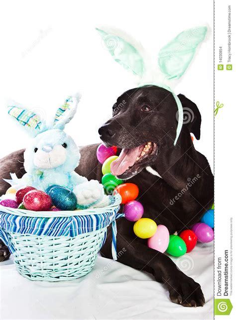 dog  easter basket stock photo image  pastel pink