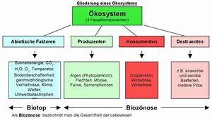 Konsumenten Und Produzentenrente Berechnen : kologie bersicht kologie ~ Themetempest.com Abrechnung