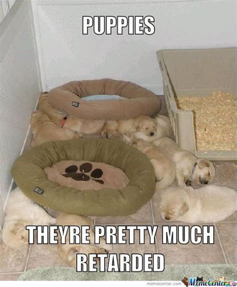 Puppies Memes - cute puppy memes best collection of funny cute puppy pictures
