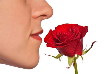 smelly roses does the nose know your future health harvard health blog harvard health publications