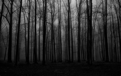 Spooky Forest Mist Desktop Background Wallpapers Eerie